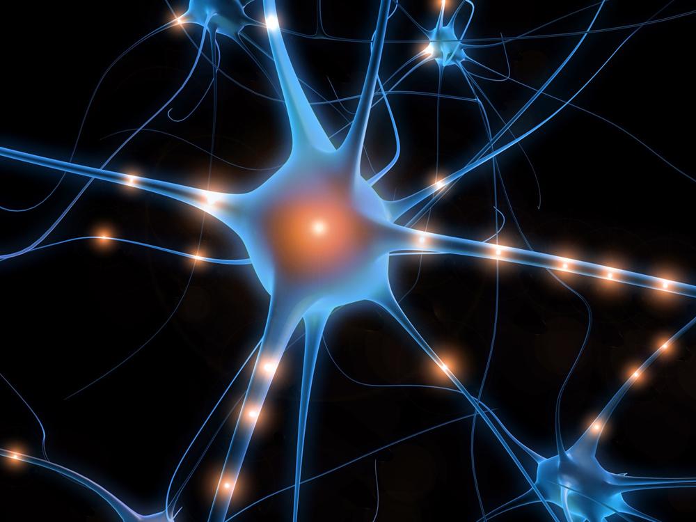 Vidéo : Le cerveau et ses automatismes